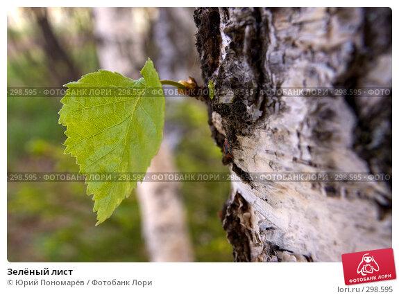 Зелёный лист, фото № 298595, снято 21 мая 2008 г. (c) Юрий Пономарёв / Фотобанк Лори