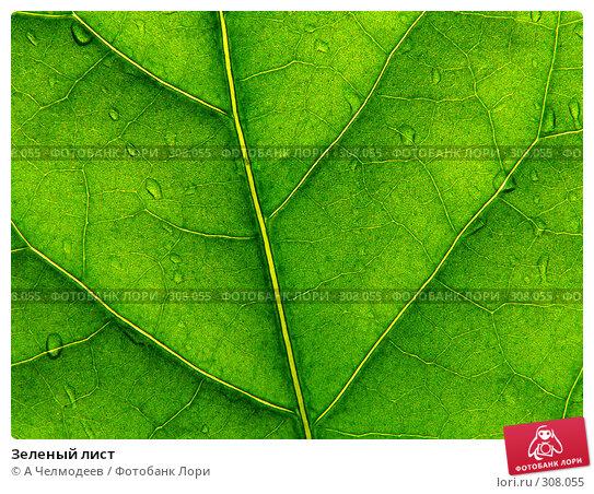Зеленый лист, фото № 308055, снято 23 апреля 2006 г. (c) A Челмодеев / Фотобанк Лори