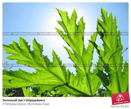 Купить «Зеленый лист борщевика», фото № 54355, снято 3 июня 2007 г. (c) Петрова Ольга / Фотобанк Лори