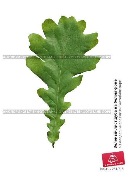 Зеленый лист дуба на белом фоне, фото № 231715, снято 24 мая 2007 г. (c) Солодовникова Елена / Фотобанк Лори