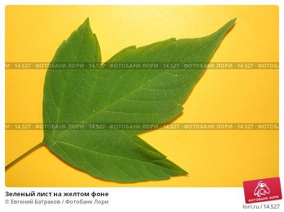 Зеленый лист на желтом фоне, фото № 14527, снято 24 мая 2006 г. (c) Евгений Батраков / Фотобанк Лори