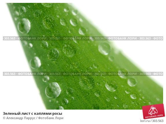 Зеленый лист с каплями росы, фото № 303563, снято 21 апреля 2008 г. (c) Александр Паррус / Фотобанк Лори