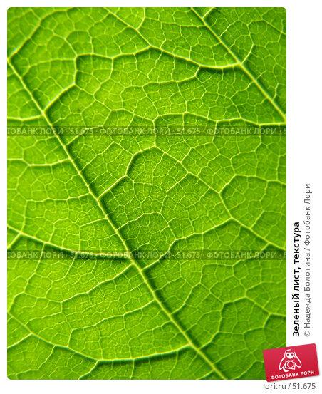 Зеленый лист, текстура, фото № 51675, снято 22 апреля 2017 г. (c) Надежда Болотина / Фотобанк Лори