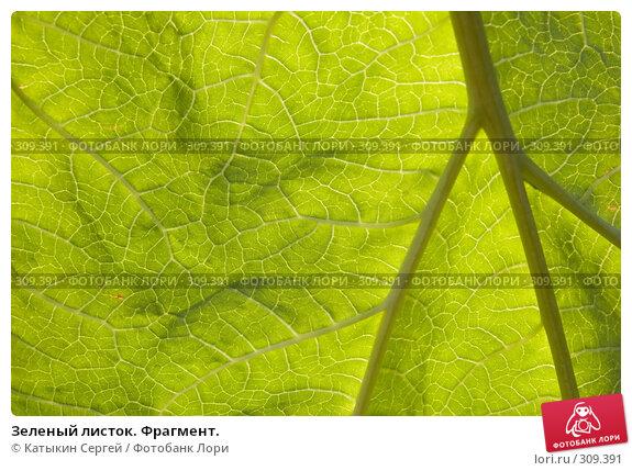 Зеленый листок. Фрагмент., фото № 309391, снято 1 июня 2008 г. (c) Катыкин Сергей / Фотобанк Лори