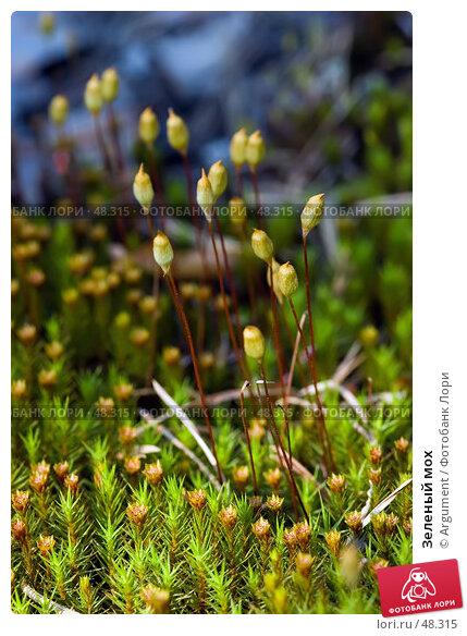 Зеленый мох, фото № 48315, снято 11 июня 2005 г. (c) Argument / Фотобанк Лори