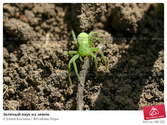 Зеленый паук на земле, фото № 49123, снято 20 апреля 2007 г. (c) Елена Блохина / Фотобанк Лори