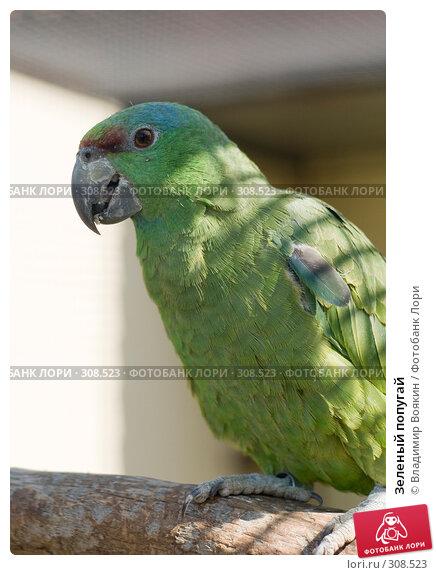 Зеленый попугай, фото № 308523, снято 17 мая 2008 г. (c) Владимир Воякин / Фотобанк Лори