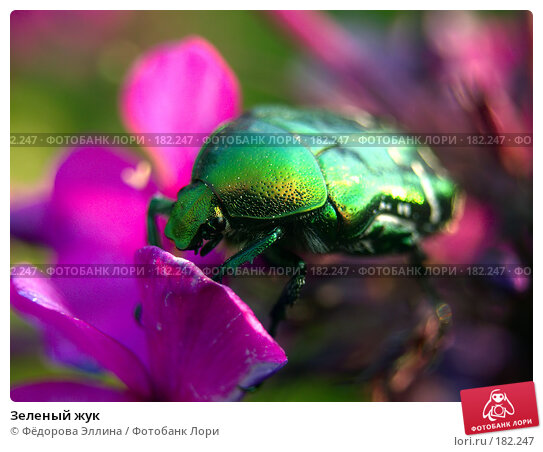 Купить «Зеленый жук», фото № 182247, снято 22 апреля 2018 г. (c) Фёдорова Эллина / Фотобанк Лори