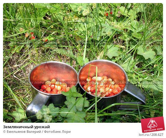 Земляничный урожай, фото № 208627, снято 21 июня 2007 г. (c) Емельянов Валерий / Фотобанк Лори