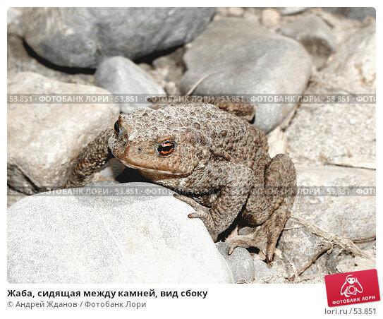 Купить «Жаба, сидящая между камней, вид сбоку», фото № 53851, снято 17 июня 2007 г. (c) Андрей Жданов / Фотобанк Лори