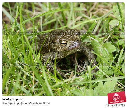 Купить «Жаба в траве», фото № 119583, снято 16 сентября 2007 г. (c) Андрей Ерофеев / Фотобанк Лори