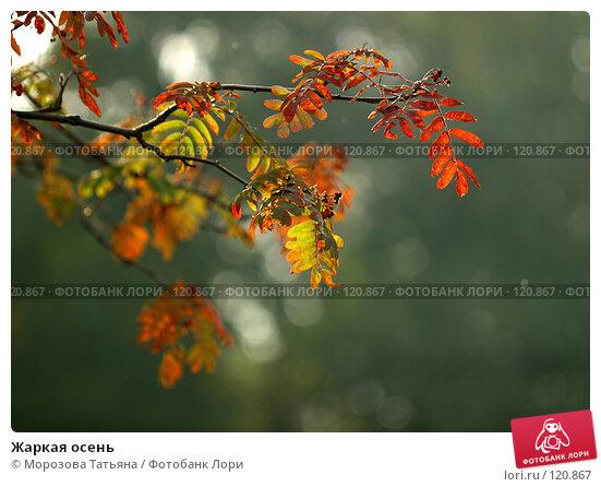 Жаркая осень, фото № 120867, снято 3 октября 2005 г. (c) Морозова Татьяна / Фотобанк Лори