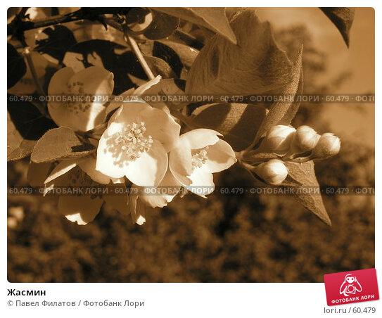 Купить «Жасмин», фото № 60479, снято 23 июня 2007 г. (c) Павел Филатов / Фотобанк Лори