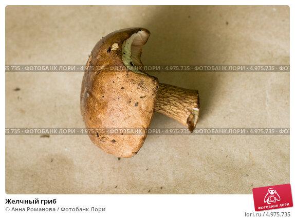 Желчный гриб. Стоковое фото, фотограф Анна Романова / Фотобанк Лори