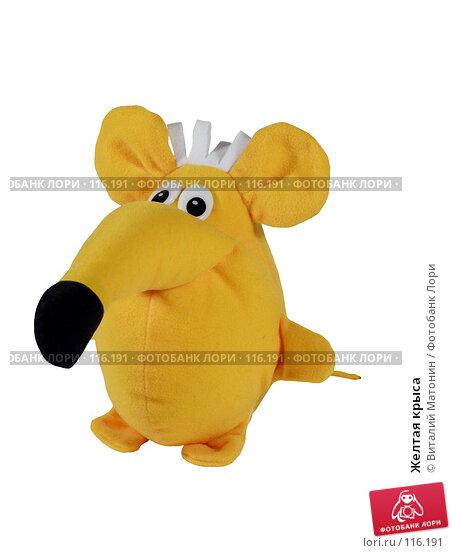 Желтая крыса, фото № 116191, снято 14 ноября 2007 г. (c) Виталий Матонин / Фотобанк Лори