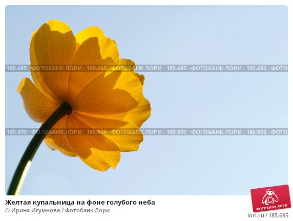 Желтая купальница на фоне голубого неба, фото № 185695, снято 13 июля 2007 г. (c) Ирина Игумнова / Фотобанк Лори