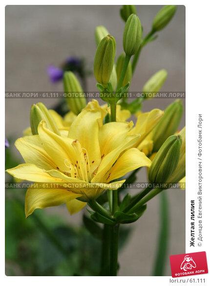 Желтая лилия, фото № 61111, снято 10 июля 2007 г. (c) Донцов Евгений Викторович / Фотобанк Лори
