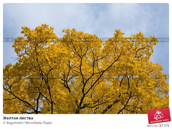 Желтая листва, фото № 87775, снято 24 сентября 2007 г. (c) Argument / Фотобанк Лори