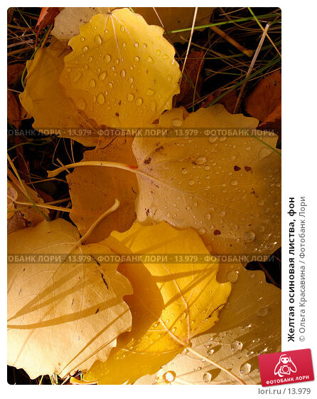 Желтая осиновая листва, фон, фото № 13979, снято 21 сентября 2006 г. (c) Ольга Красавина / Фотобанк Лори