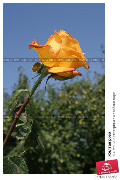 Желтая роза, фото № 68935, снято 4 августа 2007 г. (c) Останина Екатерина / Фотобанк Лори
