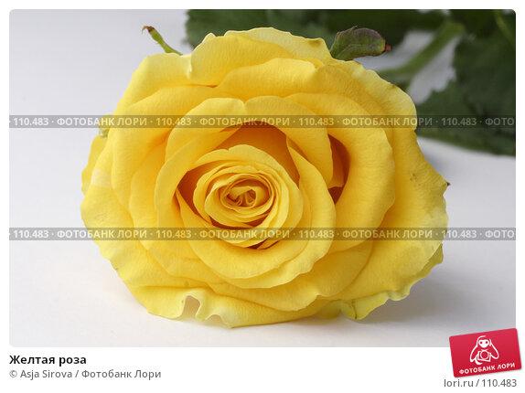 Желтая роза, фото № 110483, снято 17 июня 2007 г. (c) Asja Sirova / Фотобанк Лори