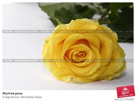 Желтая роза, фото № 110491, снято 17 июня 2007 г. (c) Asja Sirova / Фотобанк Лори