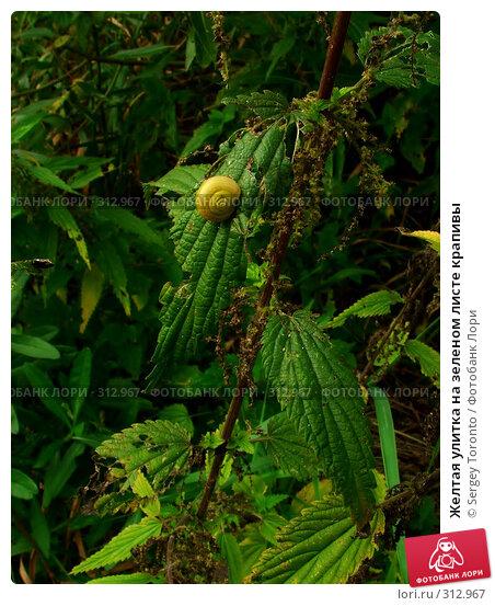 Желтая улитка на зеленом листе крапивы, фото № 312967, снято 13 февраля 2005 г. (c) Sergey Toronto / Фотобанк Лори
