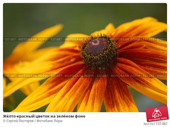 Жёлто-красный цветок на зелёном фоне, фото № 137087, снято 17 июля 2007 г. (c) Сергей Пестерев / Фотобанк Лори