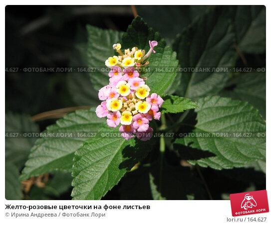 Желто-розовые цветочки на фоне листьев, фото № 164627, снято 29 июля 2006 г. (c) Ирина Андреева / Фотобанк Лори