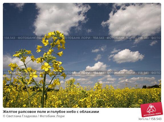 Желтое рапсовое поле и голубое небо с облаками, фото № 158543, снято 3 июня 2006 г. (c) Cветлана Гладкова / Фотобанк Лори