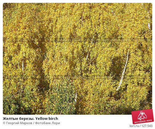 Желтые березы. Yellow birch, фото № 127543, снято 9 октября 2004 г. (c) Георгий Марков / Фотобанк Лори
