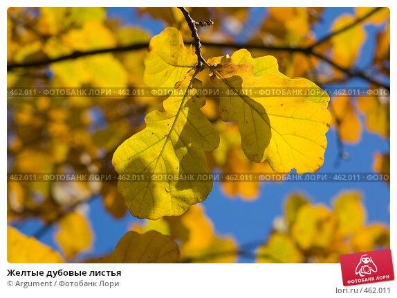Купить «Желтые дубовые листья», фото № 462011, снято 20 октября 2007 г. (c) Argument / Фотобанк Лори