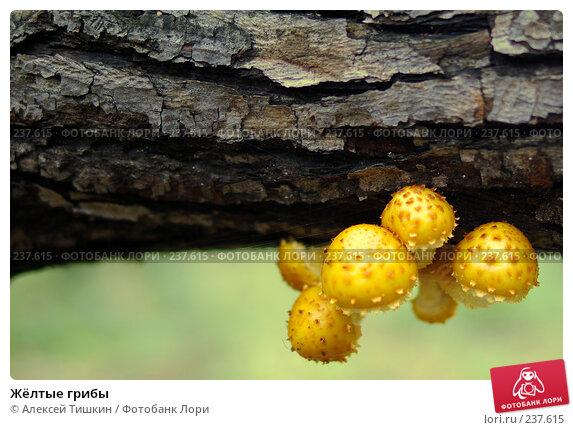 Жёлтые грибы, фото № 237615, снято 23 сентября 2007 г. (c) Алексей Тишкин / Фотобанк Лори