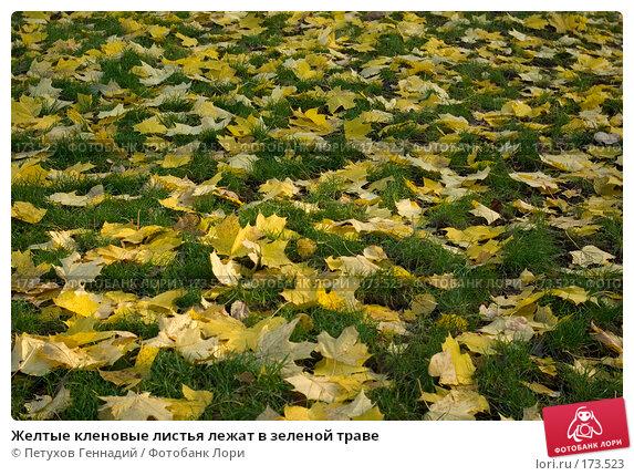Желтые кленовые листья лежат в зеленой траве, фото № 173523, снято 27 октября 2007 г. (c) Петухов Геннадий / Фотобанк Лори