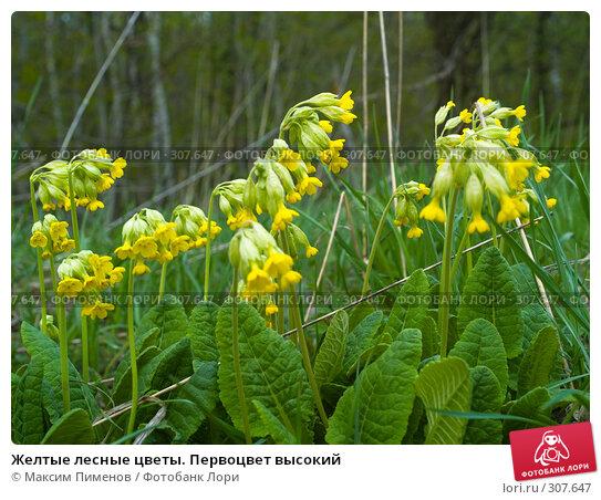 Желтые лесные цветы, фото № 307647, снято 13 мая 2007 г. (c) Максим Пименов / Фотобанк Лори