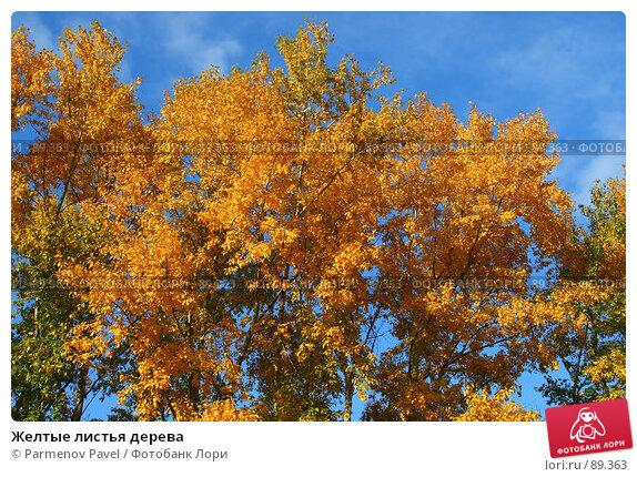 Желтые листья дерева, фото № 89363, снято 22 сентября 2007 г. (c) Parmenov Pavel / Фотобанк Лори