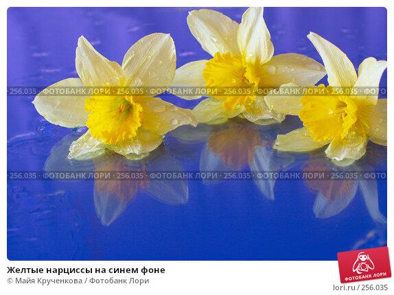 Желтые нарциссы на синем фоне, фото № 256035, снято 15 апреля 2008 г. (c) Майя Крученкова / Фотобанк Лори