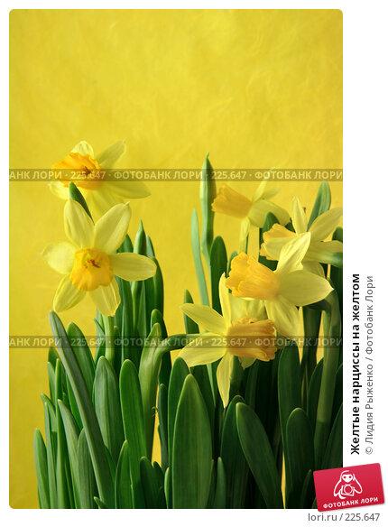 Купить «Желтые нарциссы на желтом», фото № 225647, снято 14 марта 2008 г. (c) Лидия Рыженко / Фотобанк Лори