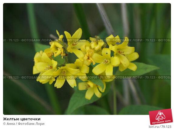 Купить «Желтые цветочки», фото № 79123, снято 12 августа 2007 г. (c) Анна / Фотобанк Лори