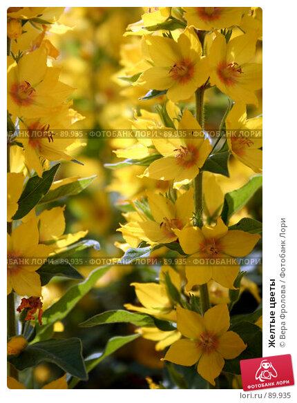 Желтые цветы, фото № 89935, снято 17 июня 2007 г. (c) Вера Фролова / Фотобанк Лори