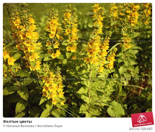 Желтые цветы, фото № 329687, снято 21 июня 2008 г. (c) Наталья Волкова / Фотобанк Лори