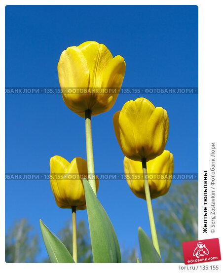 Желтые тюльпаны, фото № 135155, снято 20 мая 2005 г. (c) Serg Zastavkin / Фотобанк Лори