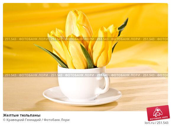 Желтые тюльпаны, фото № 251543, снято 10 мая 2005 г. (c) Кравецкий Геннадий / Фотобанк Лори