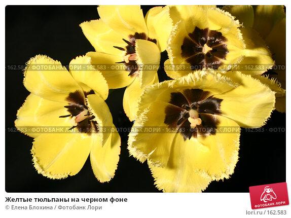 Желтые тюльпаны на черном фоне, фото № 162583, снято 9 мая 2007 г. (c) Елена Блохина / Фотобанк Лори