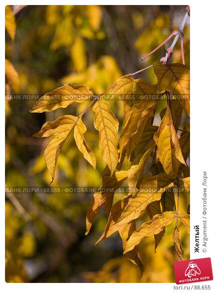 Желтый, фото № 88655, снято 20 сентября 2007 г. (c) Argument / Фотобанк Лори