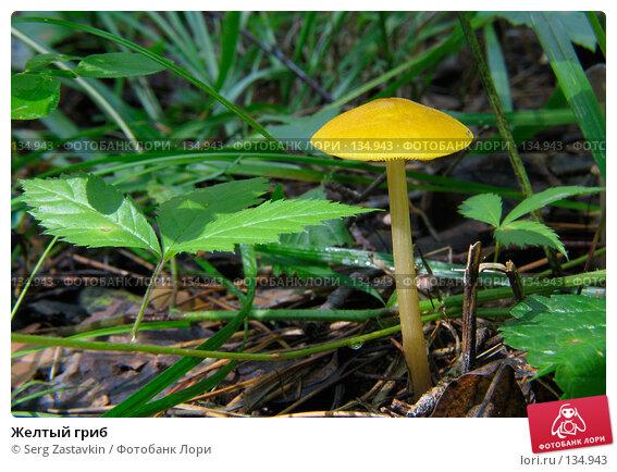 Желтый гриб, фото № 134943, снято 23 июля 2005 г. (c) Serg Zastavkin / Фотобанк Лори