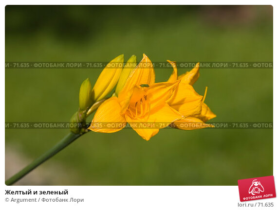 Желтый и зеленый, фото № 71635, снято 5 августа 2007 г. (c) Argument / Фотобанк Лори