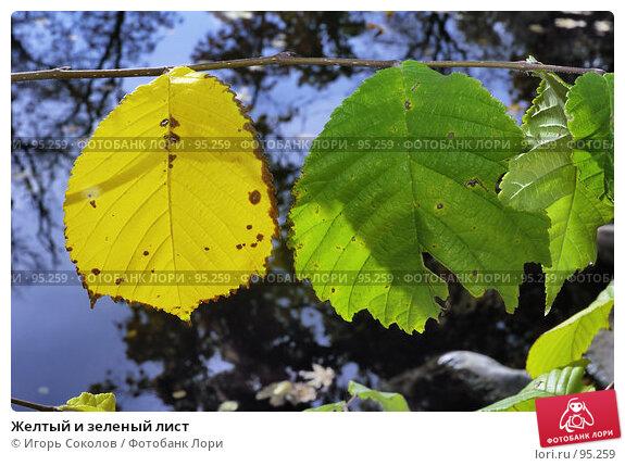 Желтый и зеленый лист, фото № 95259, снято 28 июня 2017 г. (c) Игорь Соколов / Фотобанк Лори