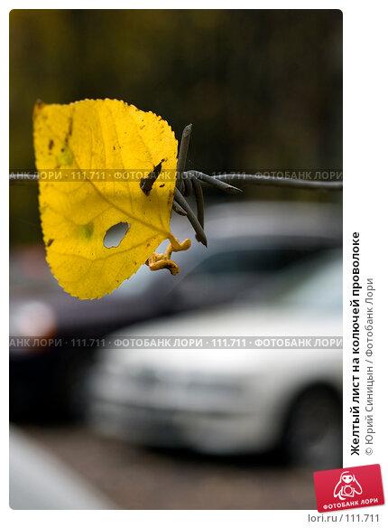 Желтый лист на колючей проволоке, фото № 111711, снято 22 октября 2007 г. (c) Юрий Синицын / Фотобанк Лори