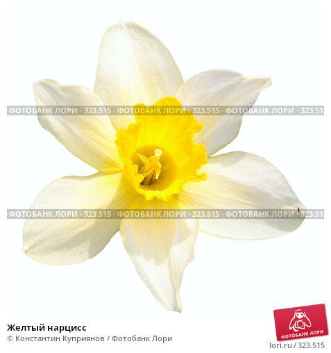 Желтый нарцисс, фото № 323515, снято 25 мая 2008 г. (c) Константин Куприянов / Фотобанк Лори